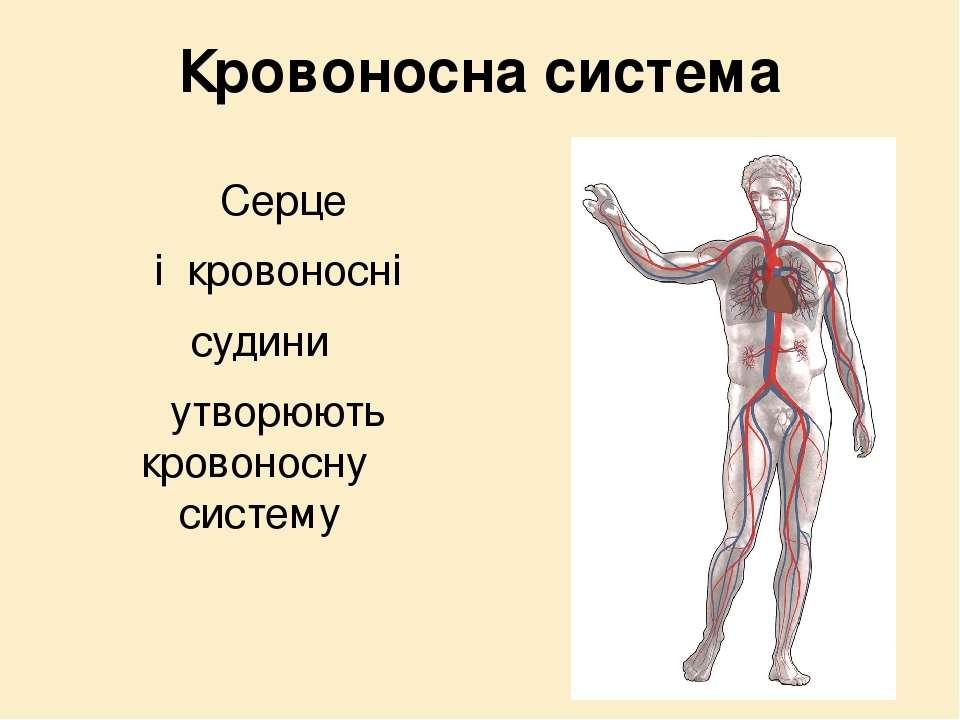 Кровоносна система Серце і кровоносні судини утворюють кровоносну систему