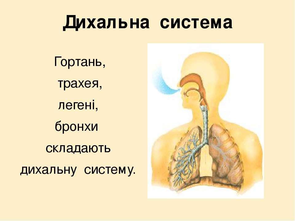 Дихальна система Гортань, трахея, легені, бронхи складають дихальну систему.