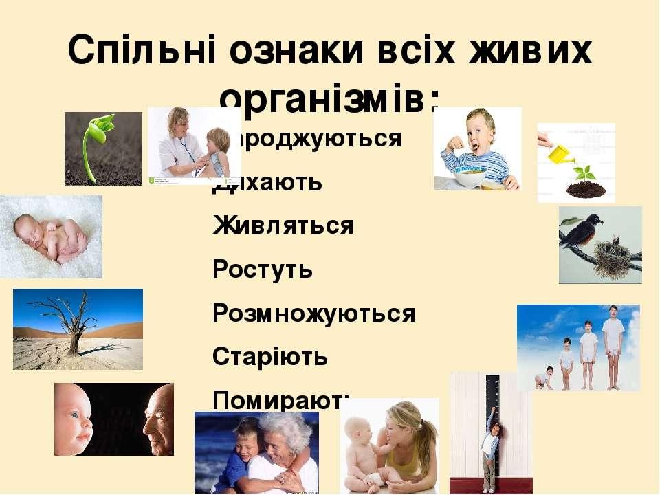 Спільні ознаки всіх живих організмів: Народжуються Дихають Живляться Ростуть ...