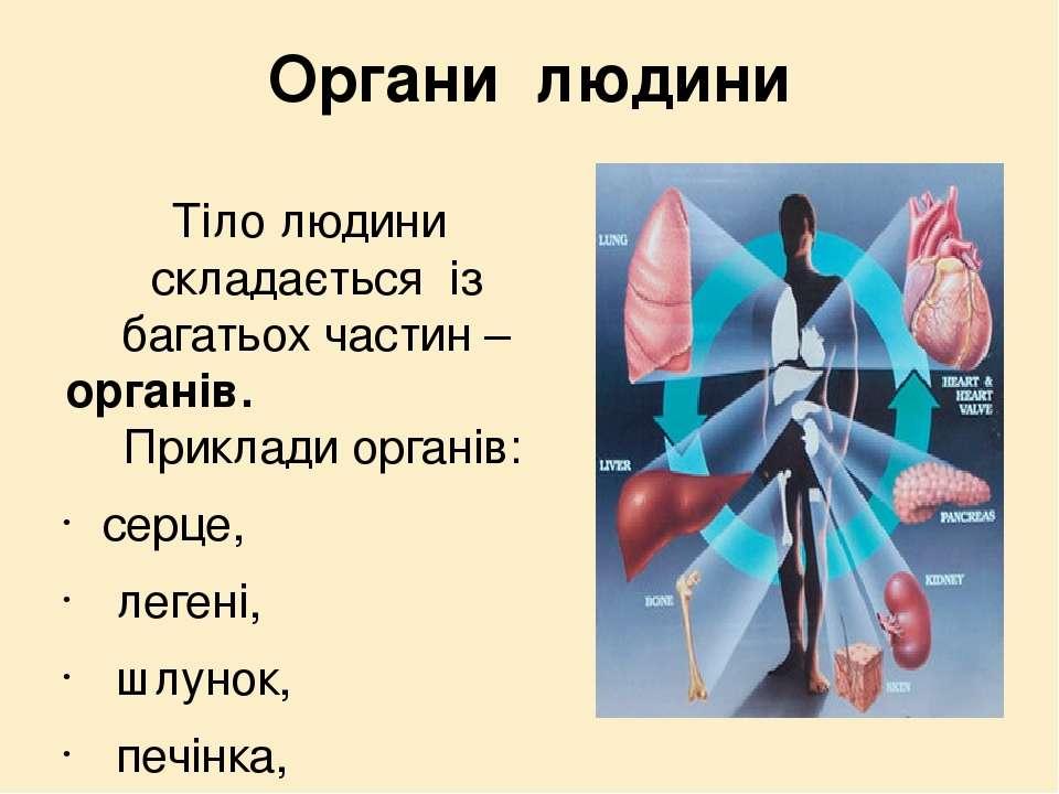Органи людини Тіло людини складається із багатьох частин –органів. Приклади о...