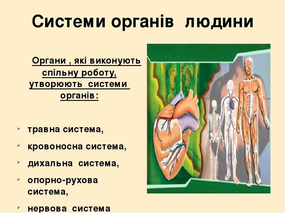 Системи органів людини Органи , які виконують спільну роботу, утворюють систе...