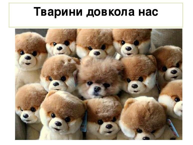 Тварини довкола нас
