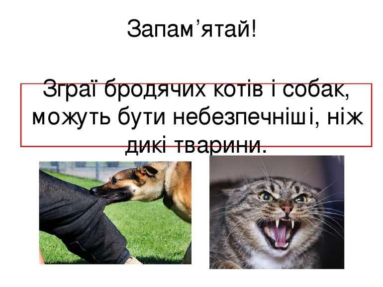 Запам'ятай! Зграї бродячих котів і собак, можуть бути небезпечніші, ніж дикі ...