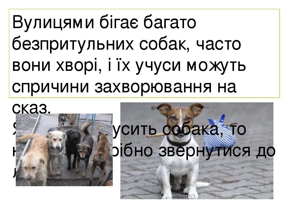 Вулицями бігає багато безпритульних собак, часто вони хворі, і їх учуси можут...