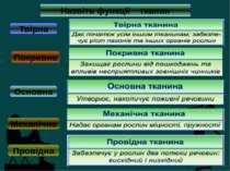 Назвіть функції тканин Твірна Покривна Основна Механічна Провідна