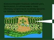 Фотосинтезуючі тканини забезпечують фотосинтез, їх клітини мають тонку оболон...