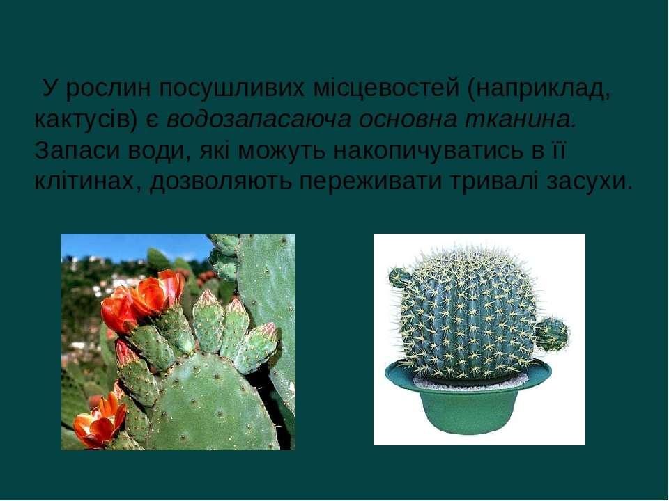 У рослин посушливих місцевостей (наприклад, кактусів) є водозапасаюча основна...