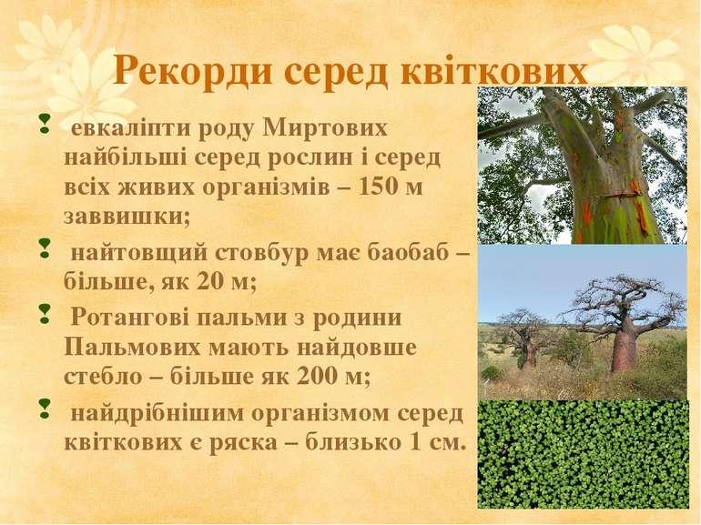 Рекорди серед квіткових евкаліпти роду Миртових найбільші серед рослин і сере...
