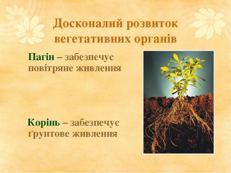 Досконалий розвиток вегетативних органів Пагін – забезпечує повітряне живленн...