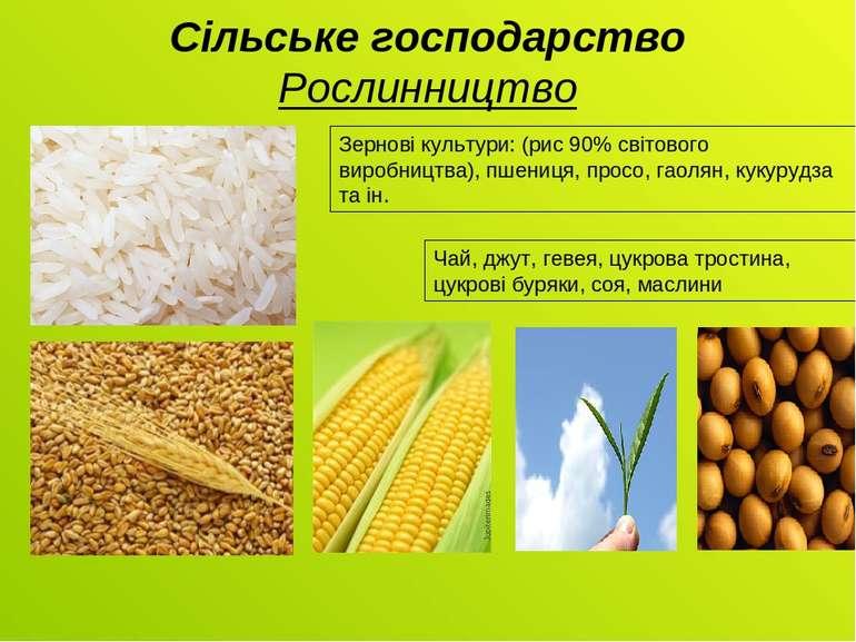 Сільське господарство Рослинництво Зернові культури: (рис 90% світового вироб...