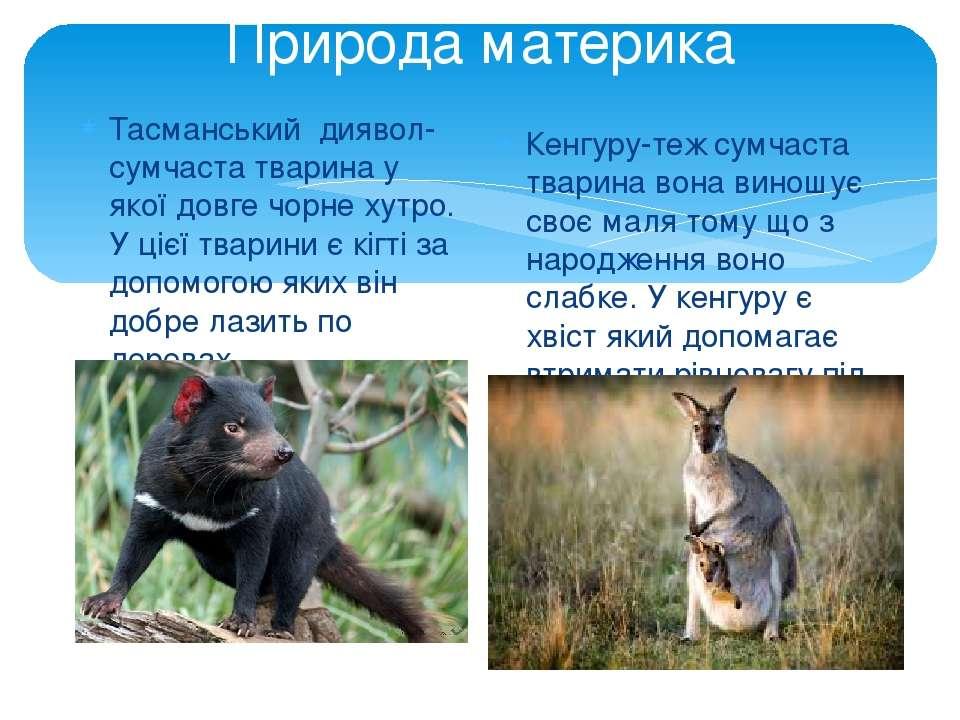 Природа материка Тасманський диявол-сумчаста тварина у якої довге чорне хутро...