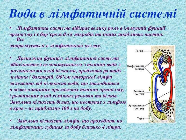 Вода в лімфатичній системі Лімфатична система відіграє велику роль в іммунній...
