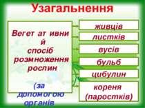 Вегетативний спосіб розмноження рослин (за допомогою органів рослин) живців л...