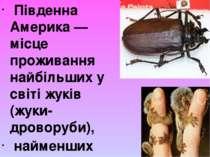 Південна Америка — місце проживання найбільших у світі жуків (жуки-дроворуби)...