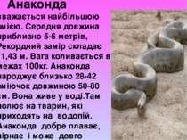 Анаконда вважається найбільшою змією. Середня довжина приблизно 5-6 метрів, Р...
