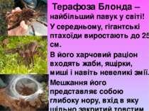 Терафоза Блонда – найбільший павук у світі! У середньому, гігантські птахоїд...