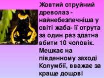 Жовтий отруйний древолаз - найнебезпечніша у світі жаба- її отрута за один ра...