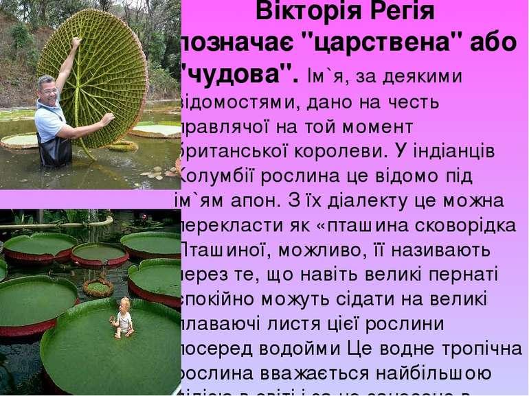 """Вікторія Регія позначає """"царствена"""" або """"чудова"""". Ім`я, за деякими відомостям..."""