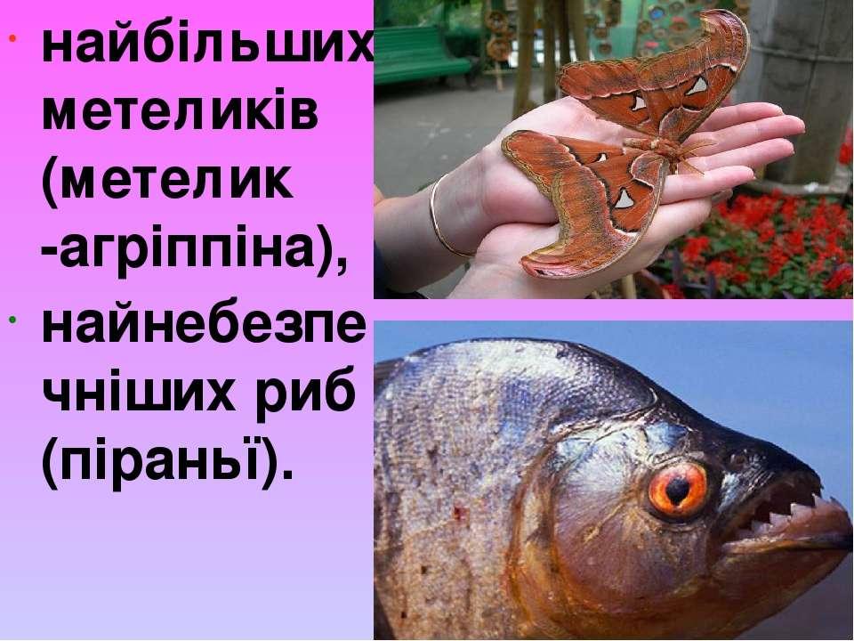 найбільших метеликів (метелик -агріппіна), найнебезпечніших риб (піраньї).