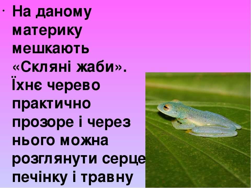 На даному материку мешкають «Скляні жаби». Їхнє черево практично прозоре і че...