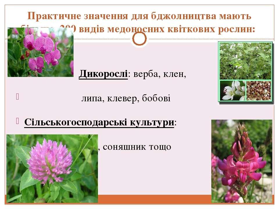 Практичне значення для бджолництва мають більше 200 видів медоносних квіткови...