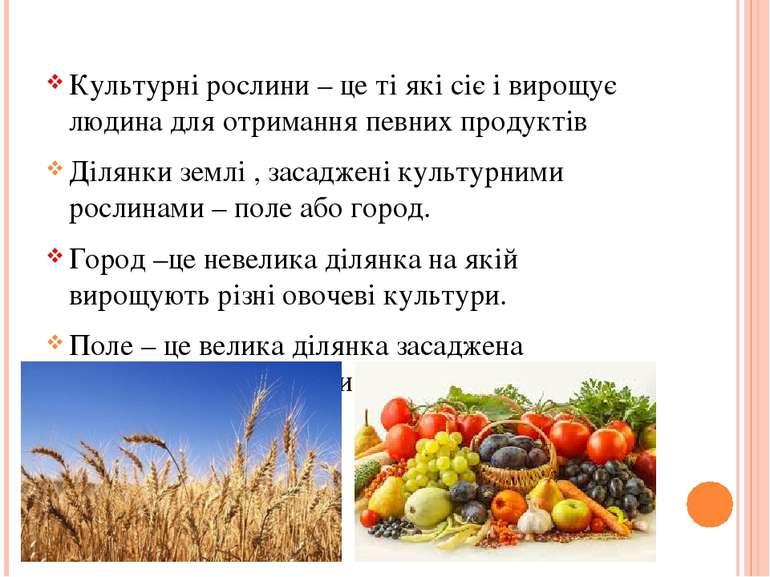 Культурні рослини – це ті які сіє і вирощує людина для отримання певних проду...