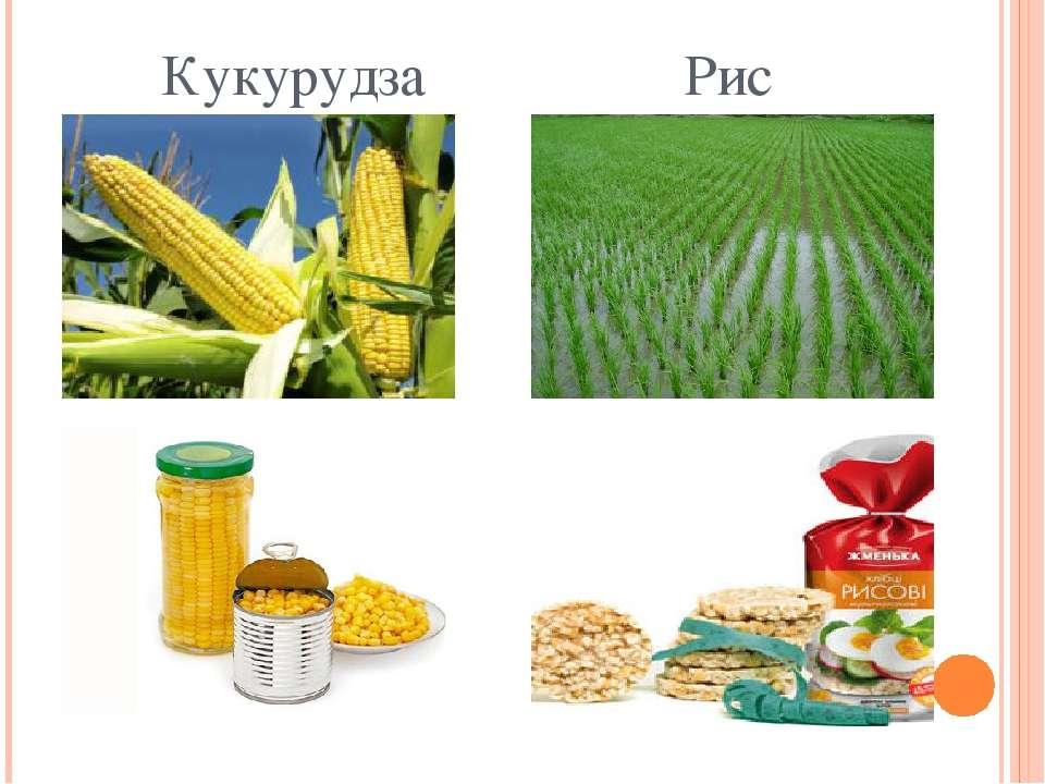 Кукурудза Рис