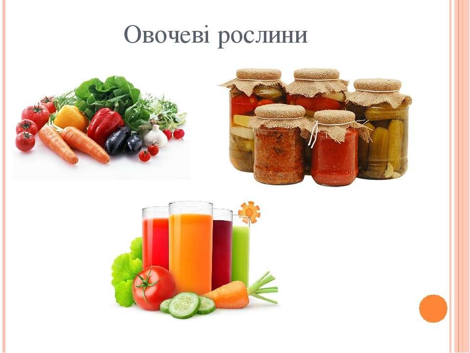 Овочеві рослини