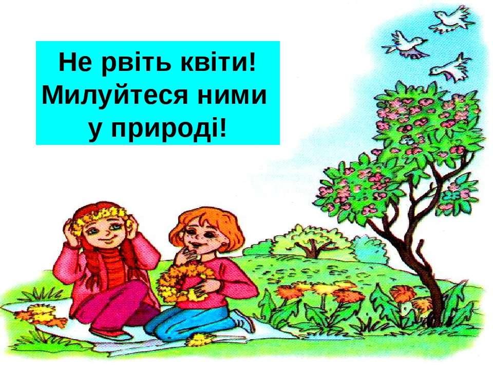 ? Не рвіть квіти! Милуйтеся ними у природі!