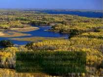 Модрина в Сибірі утворює ліси, які називаються світлохвойна тайга. Із першими...