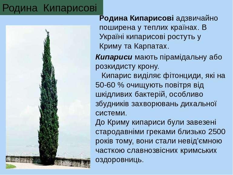 Родина Кипарисові адзвичайно поширена у теплих країнах. В Україні кипарисові ...