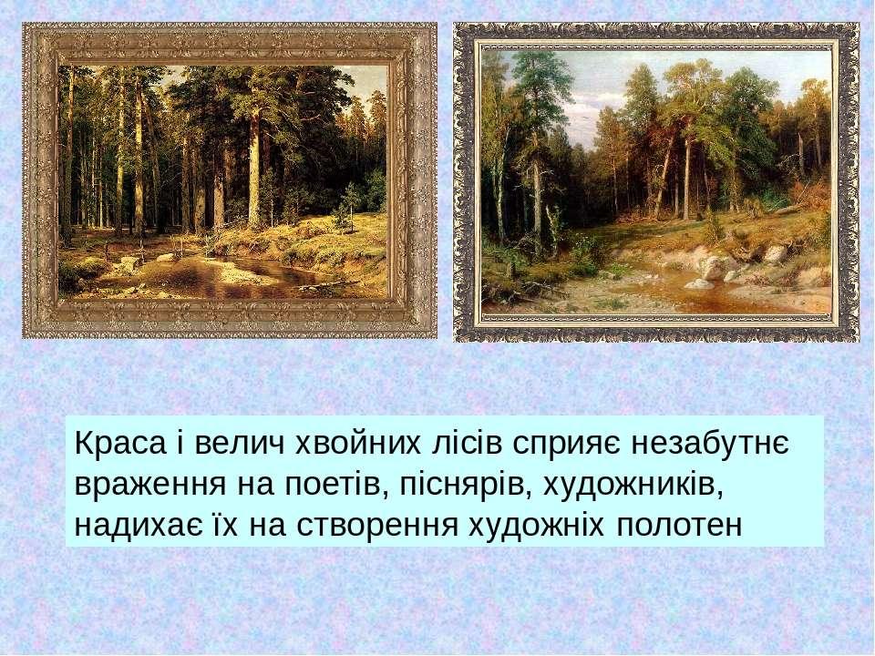 Краса і велич хвойних лісів сприяє незабутнє враження на поетів, піснярів, ху...