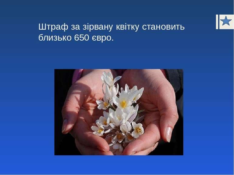 Штраф за зірвану квітку становить близько 650 євро.