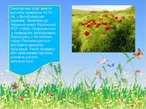 Багаторічна трав`яниста рослина заввишки 40-70 см, з бульбовидним коренем. За...