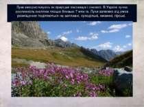 Луки використовують як природні пасовища і сіножаті. В Україні лучна рослинні...
