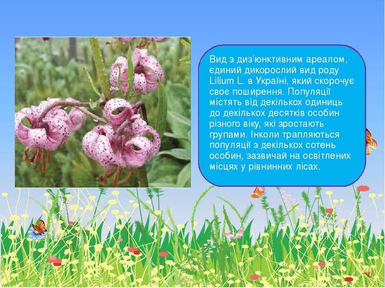 Вид з диз'юнктивним ареалом, єдиний дикорослий вид роду Lilium L. в Україні, ...
