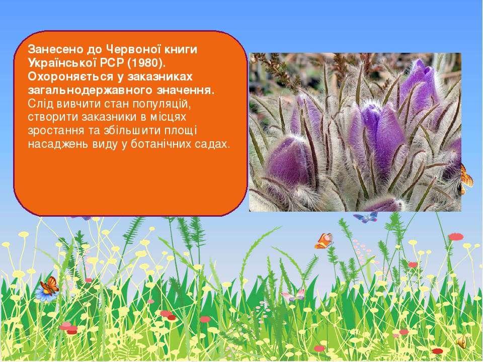 Занесено до Червоної книги Української РСР (1980). Охороняється у заказниках ...