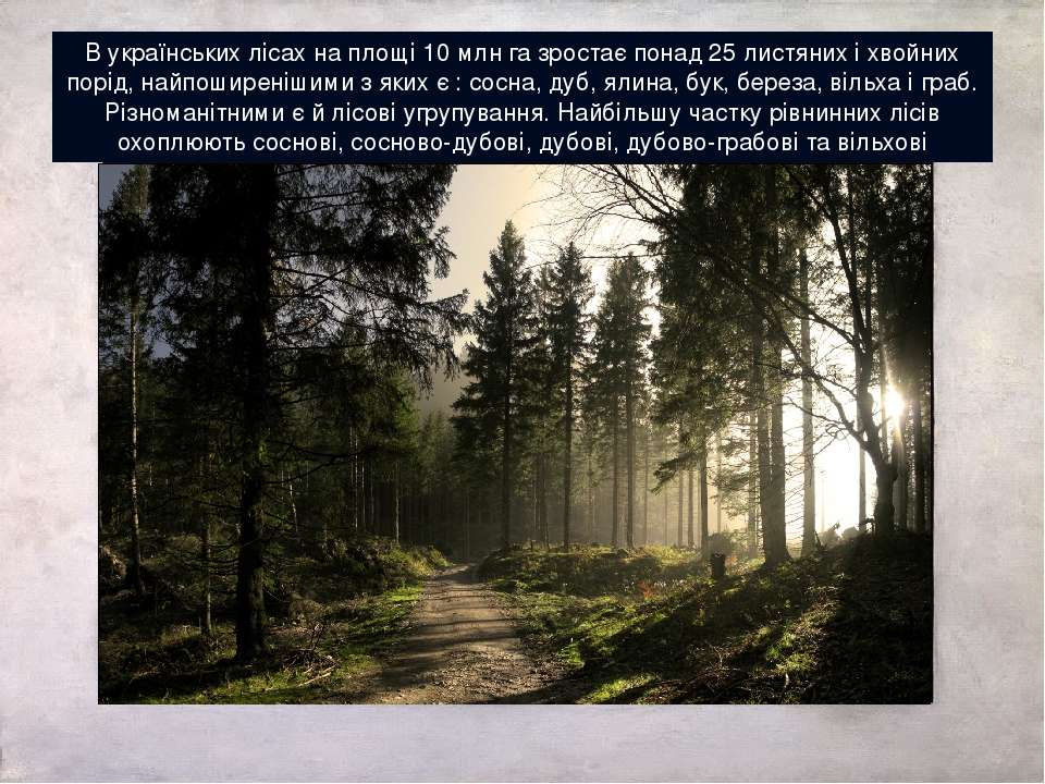 В українських лісах на площі 10 млн га зростає понад 25 листяних і хвойних по...