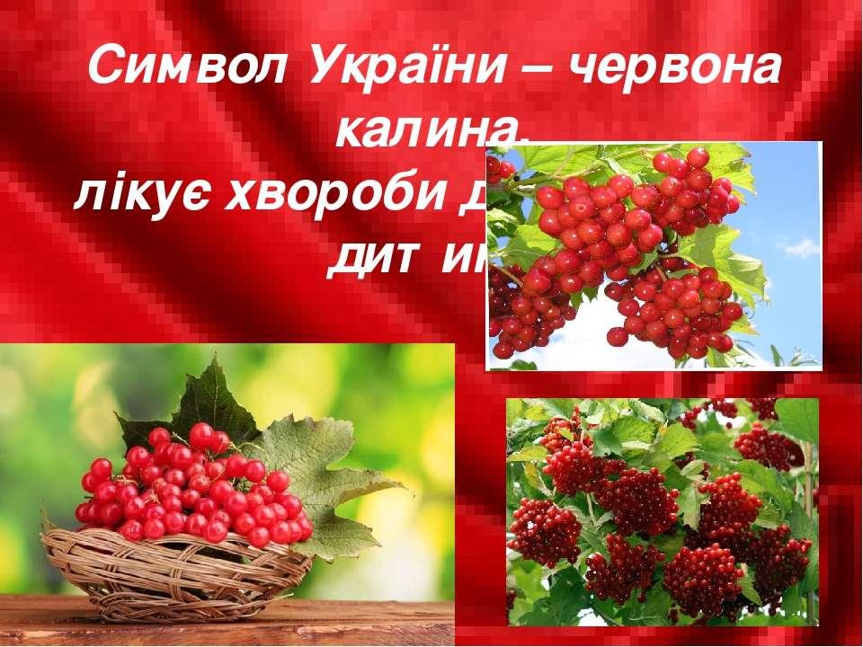 Символ України – червона калина, лікує хвороби дорослого й дитини