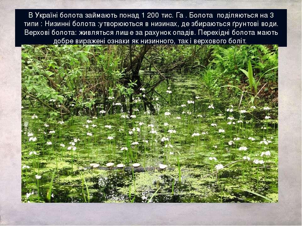 В Україні болота займають понад 1 200 тис. Га . Болота поділяються на 3 типи ...