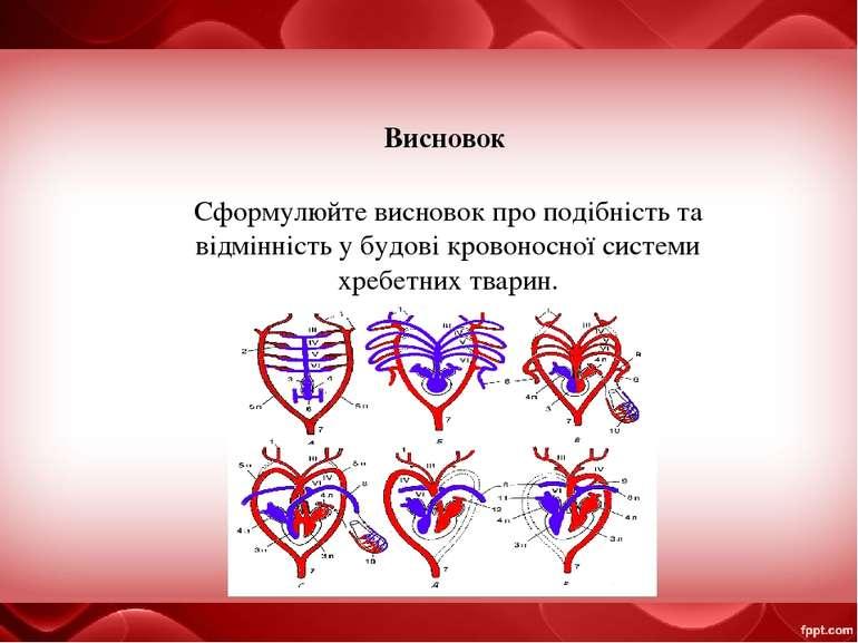 Висновок Сформулюйте висновок про подібність та відмінність у будові кровонос...