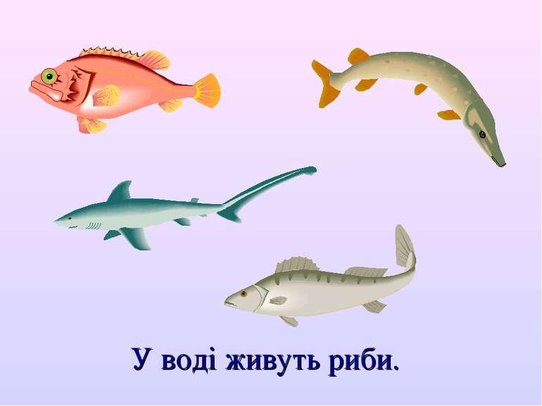 У воді живуть риби.