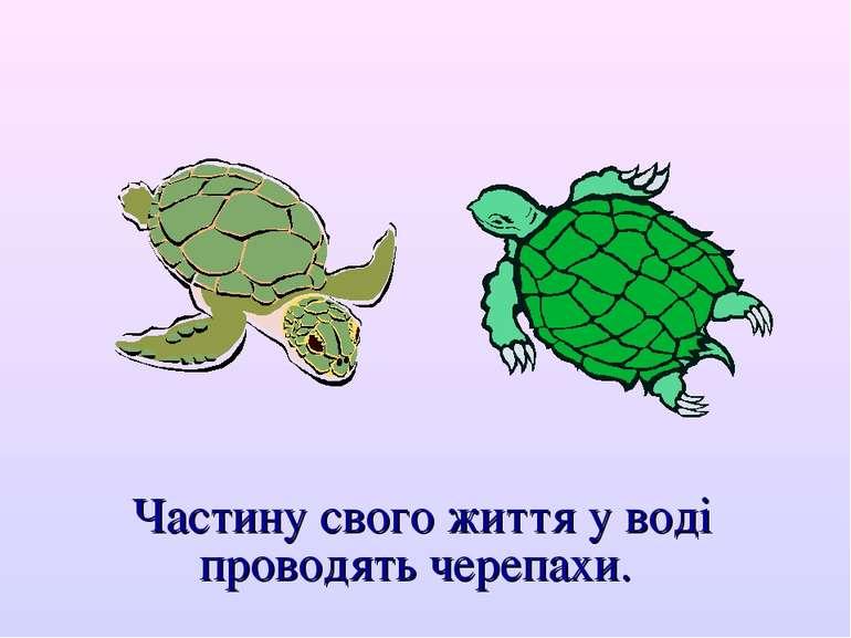 Частину свого життя у воді проводять черепахи.