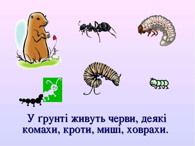 У ґрунті живуть черви, деякі комахи, кроти, миші, ховрахи.