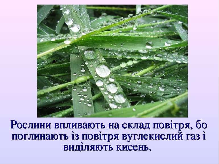 Рослини впливають на склад повітря, бо поглинають із повітря вуглекислий газ ...