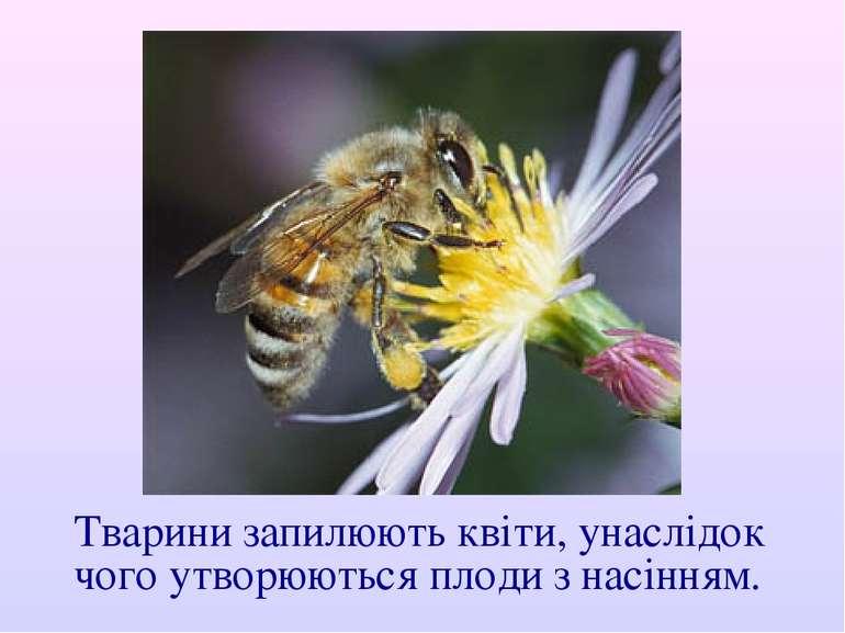 Тварини запилюють квіти, унаслідок чого утворюються плоди з насінням.