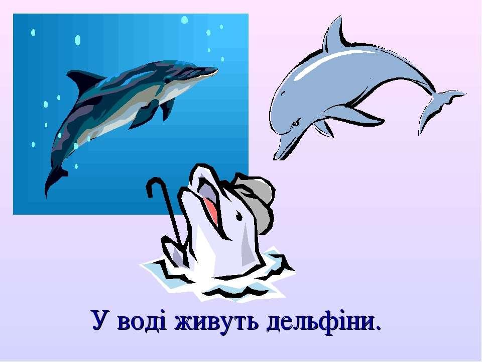 У воді живуть дельфіни.