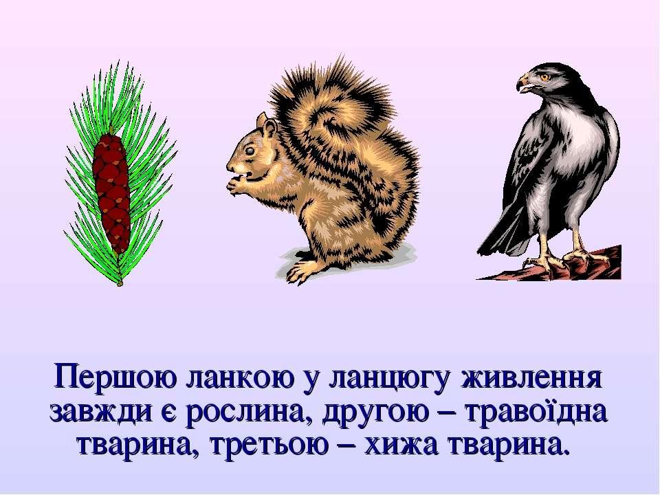 Першою ланкою у ланцюгу живлення завжди є рослина, другою – травоїдна тварина...
