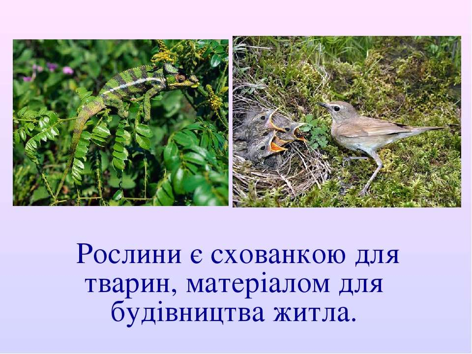 Рослини є схованкою для тварин, матеріалом для будівництва житла.