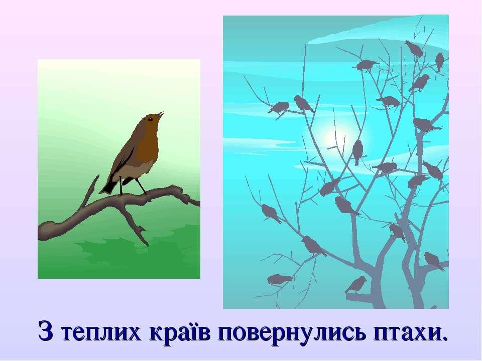 З теплих країв повернулись птахи.